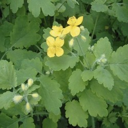 Rostlina v přírodě