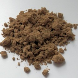 Polyalthia bullata prášek
